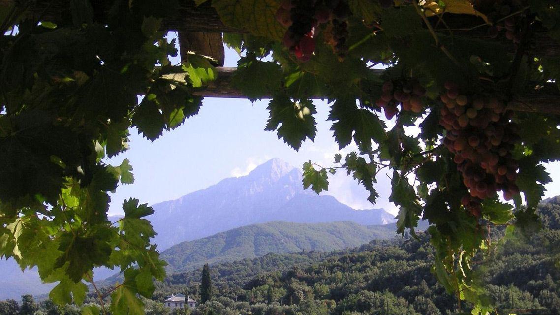 Святая Гора Афон: что говорил старец Иеремия, чем Афон ценен для современности